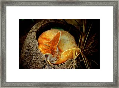 Napping Fennec Fox Framed Print