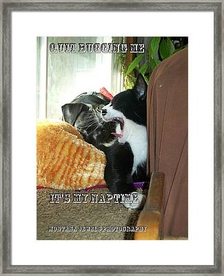 Framed Print featuring the photograph Naptime by Jewel Hengen