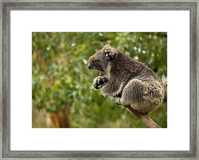 Naptime Framed Print by Mike  Dawson