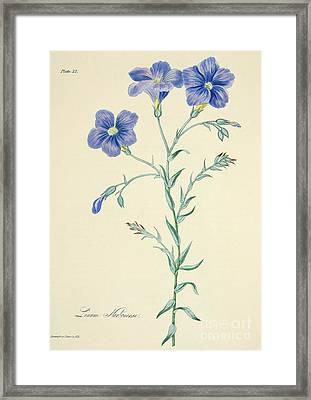 Narbonne Blue Flax Framed Print