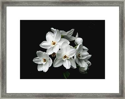 Narcissus The Breath Of Spring Framed Print by Angela Davies