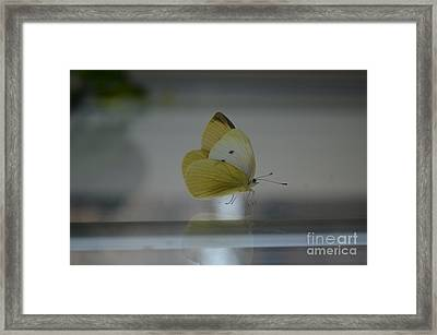 Narcissus Framed Print by Eva Maria Nova