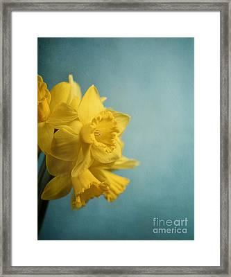 Narcissus Framed Print