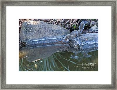 Narcissus Framed Print by Kate Brown
