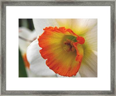 Narcissus Framed Print by Michelle Hastings