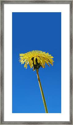 Framed Print featuring the photograph Narrow Poster - Little Piece Of Sunshine  by Marilynne Bull