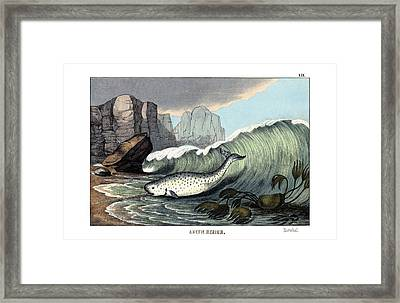 Narwal Framed Print by Splendid Art Prints