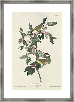 Nashville Warbler Framed Print by Rob Dreyer