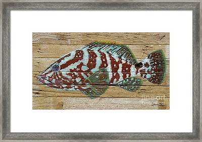 Nassau Grouper Framed Print by Danielle Perry