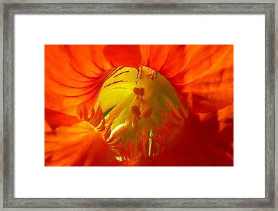 Nasturtium Inner Light Framed Print by Lori Seaman