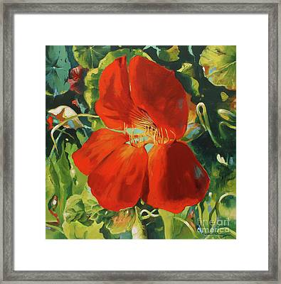 Nasturtium Framed Print by Lin Petershagen