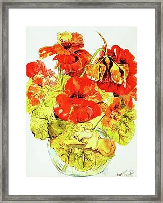 Nasturtiums Framed Print by Joan Thewsey
