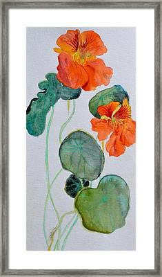 Nasturtiums Study Two Framed Print by Beverley Harper Tinsley