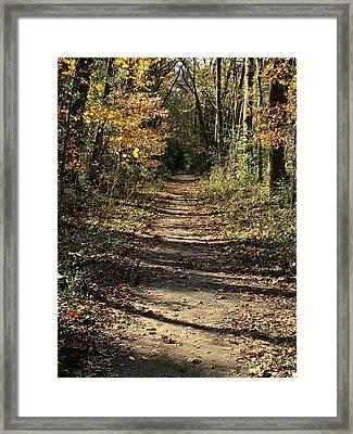 Natchez Trace In Warner Park Framed Print