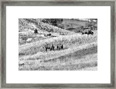 National Bison Range Wildlife Refuge Mt Usa Framed Print