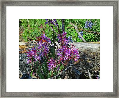 Framed Print featuring the photograph National Parks. From The Ashes To New Life. by Ausra Huntington nee Paulauskaite