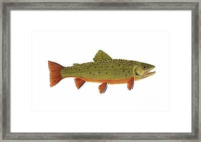 Native Brook Trout Framed Print