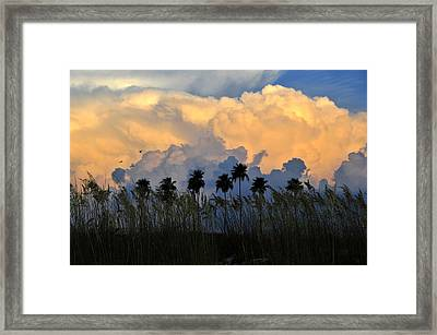 Native Florida Framed Print by David Lee Thompson