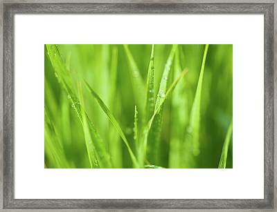 Native Prairie Grasses Framed Print by Steve Gadomski