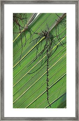 Natural 11 15b Framed Print