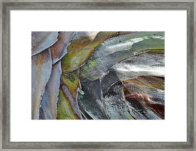 Natural 4 15 Framed Print