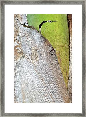 Natural 8 15c Framed Print