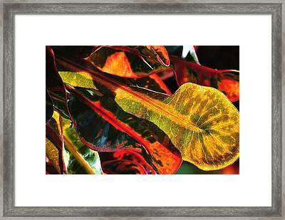 Natural 9 17c Framed Print