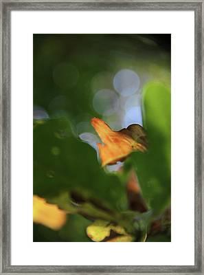 Natural Abstract Framed Print by Odd Jeppesen