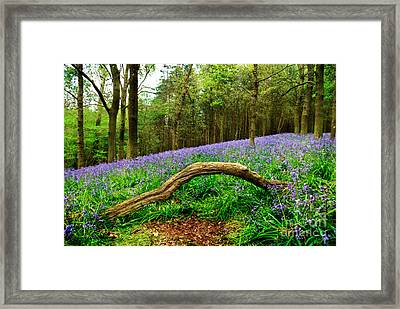 Natural Arch And Bluebells Framed Print by John Edwards
