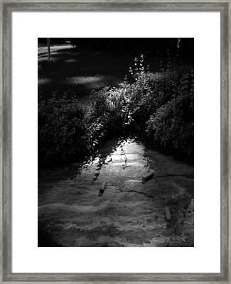 Natural Art Framed Print by Bailey Joyce
