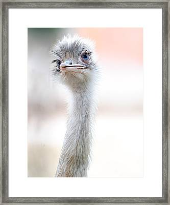 Natural Beauty Framed Print by Fulvio Pellegrini