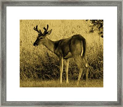 Natural Beauty- Vintage Version Framed Print