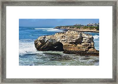 Natural Bridges Santa Cruz Framed Print