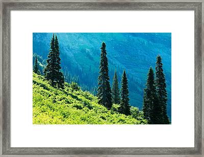 Natural Colonnades Framed Print