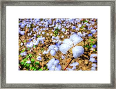 Natural Cotton Framed Print by JC Findley
