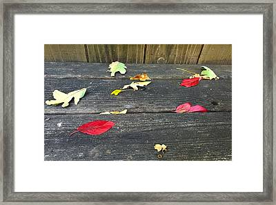 Natural Fall Framed Print