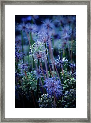 Natural Fireworks 4791 H_2 Framed Print