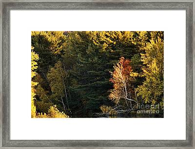 Framed Print featuring the photograph natural Framing by Aimelle