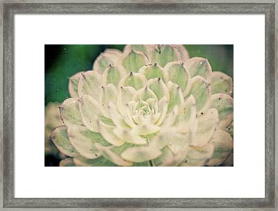 Framed Print featuring the photograph Natural Geometry by Ana V Ramirez