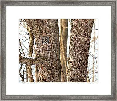 Natural Habitat Framed Print by Heather King