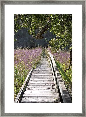 Natural Healing Framed Print by John Knapko
