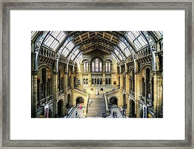 Framed Print featuring the photograph Natural History  by Michael Hope