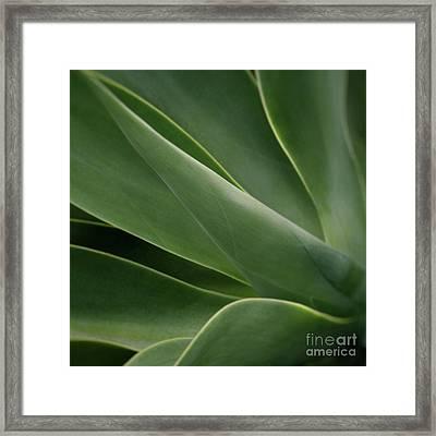 Natural Impressions Framed Print by Sharon Mau