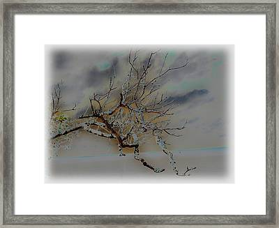 Natural Inversion -1 Framed Print by Amanda Vouglas
