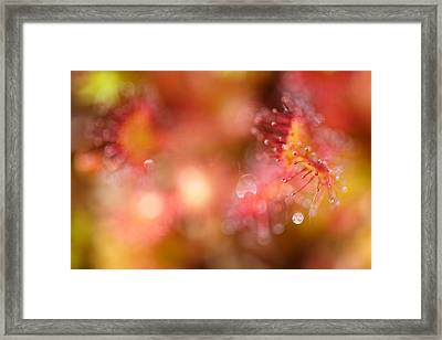 Natural Jewelery Framed Print