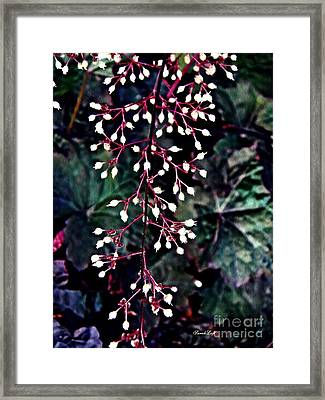 Natural Lace Framed Print by Sarah Loft