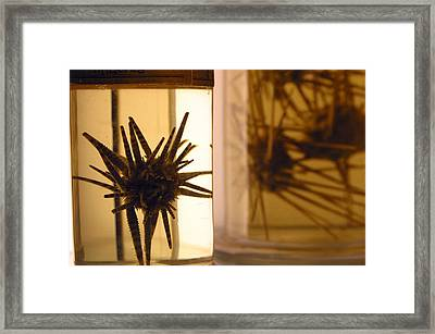 Natural Land Mines Framed Print by Jez C Self