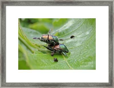 Natural Love Framed Print by Kristine Nora