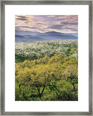 Natural Moments Photography Orchards Framed Print by Darwin Wiggett