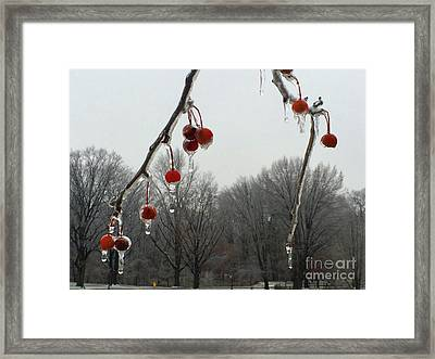 Natural Ornaments In A Frozen Landscape Framed Print